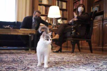«Δεν ξέρεις την Καλυψώ;»: Ο Μητσοτάκης γνώρισε τη γάτα της Σακελλαροπούλου